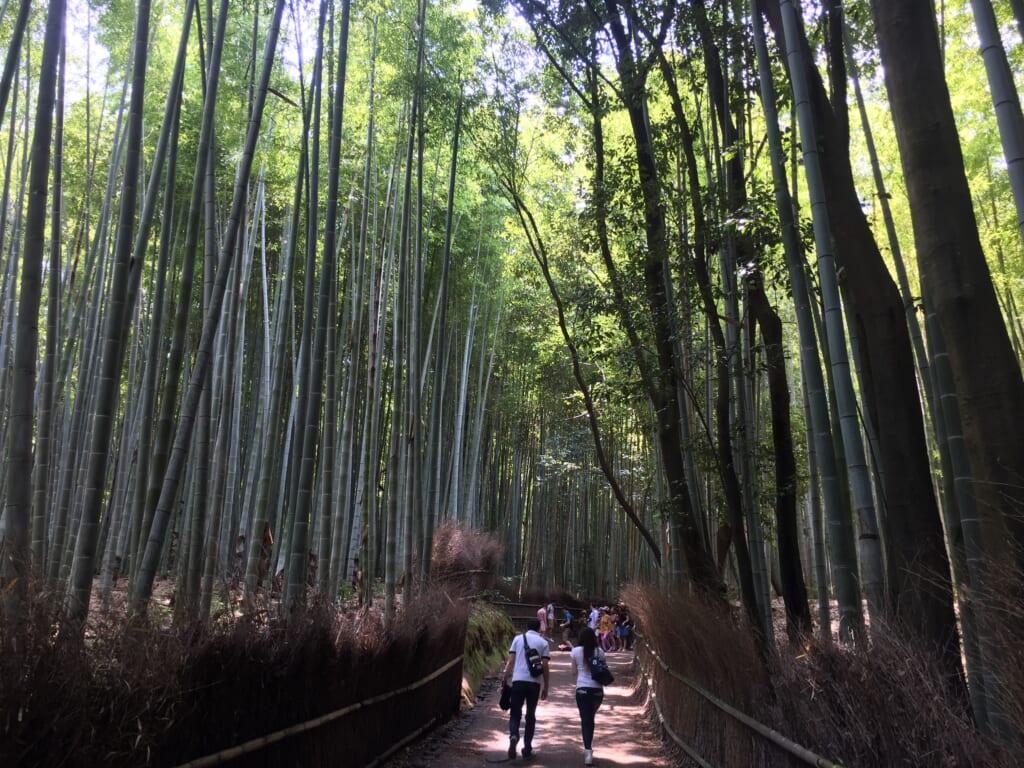 6.竹林の小径